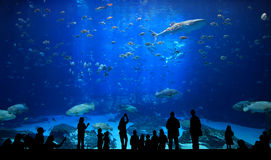 Aquarium silhouettes. Very large aquarium with people silhouetted. Lots of fish including a whale shark Stock Photo