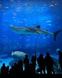Aquarium silhouettes. Very large aquarium with people silhouetted. Lots of fish including a whale shark Stock Image