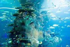 Aquarium, Singapore. Huge aquarium in S.E.A. Aquarium in Singapore, on Sentosa island. Picture taken in March 2016 royalty free stock image