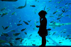 Aquarium, Singapour Photographie stock libre de droits