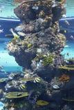 Aquarium Singapour d'océan d'île de Sentosa Images stock