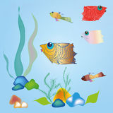 Aquarium. Small fishes, stones and plants in an aquarium Royalty Free Stock Image