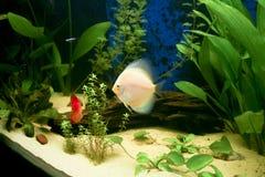 Tropical aquarium tank Royalty Free Stock Photography