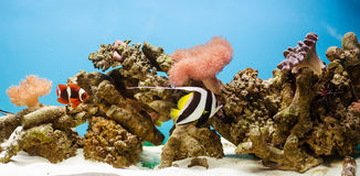 Aquarium. Spectacular aquarium with corals, rocks and fish royalty free stock photography