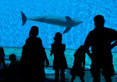 Aquarium Spectator Silhouettes. Spectator silhouettes watching a dolphin Stock Photo