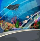 Aquarium with stingray swimming Stock Photos