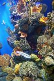 Aquarium. An aquarium with submarine life, reef and fishes Royalty Free Stock Photos