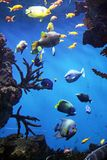Aquarium. An aquarium with submarine life, reef and fishes Stock Photography