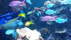 Aquarium  in Tampa. Life Under the Sea Royalty Free Stock Images