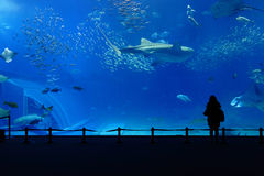 Aquarium tank. With alone people silhouette Royalty Free Stock Images
