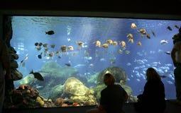 Aquarium tank. Large blue fish tank aquarium with fish and sharks swimming stock image