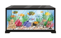 Aquarium Tank Cartoon Illustration. Aquarium tank cartoon vector illustration with swimming exotic freshwater fishes seashells seaweeds  equipment and Royalty Free Stock Photography