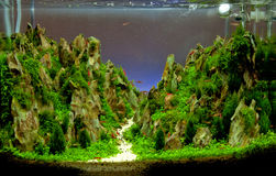 Aquarium tank. Fresh water aquarium tank decoration Royalty Free Stock Photos