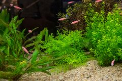 Aquarium tank with a variety of plants royalty free stock images