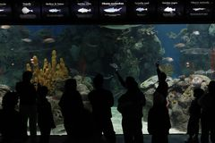 Aquarium in Temaiken Stock Photos