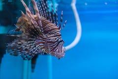 Aquarium Thailand Stockfoto