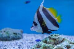 Aquarium Thailand Stockfotografie