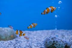 Aquarium Thailand Lizenzfreies Stockbild