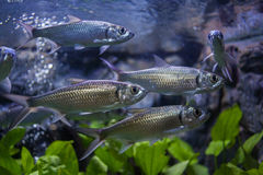 Aquarium Thailand Lizenzfreie Stockfotografie