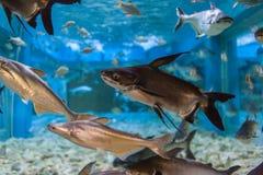Aquarium Thailand Stockbild