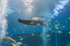 Aquarium Thailand Stockfotos