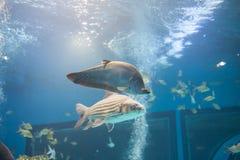 Aquarium Thailand Lizenzfreies Stockfoto