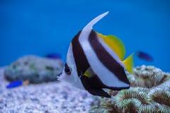 Aquarium Thailand Lizenzfreie Stockbilder