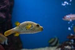 Aquarium Thailand royalty-vrije stock foto's