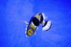 Aquarium-Tiernatur der Fische exotische Stockfotos