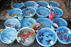 Aquarium traditionnel exotique. photographie stock libre de droits