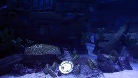 Aquarium and Treasure Royalty Free Stock Photos