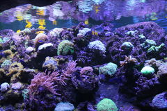 Aquarium tropical Photo stock