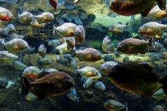 Aquarium tropical avec la mosaïque de beaucoup d'espèces des poissons colorés f Image libre de droits