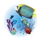 Aquarium Royalty Free Stock Photography