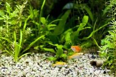 Aquarium Tropical Community Stock Photos