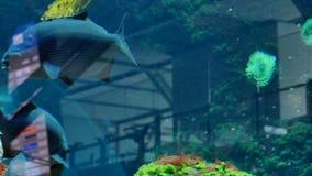 Aquarium tropical fish. Exotic fish swimming aquarium modern building reflections stock footage