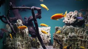 Aquarium with tropical fish stock footage