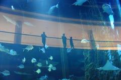 Aquarium tropisch vissen en koraalrif Royalty-vrije Stock Afbeeldingen