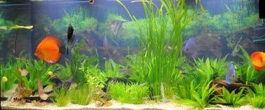 Aquarium-tropische vissen Royalty-vrije Stock Foto