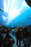 Aquarium Tunnel. People walking through a transparent tunnel in a large aquarium Royalty Free Stock Image