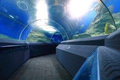 Aquarium tunnel. Image of aquarium tunnel walk way Royalty Free Stock Photos