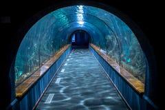 Aquarium tunnel Stock Photography