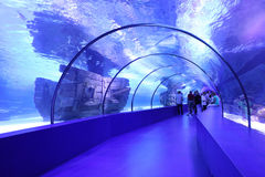 Aquarium Tunnel Royalty Free Stock Photography