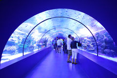 Aquarium Tunnel Royalty Free Stock Images
