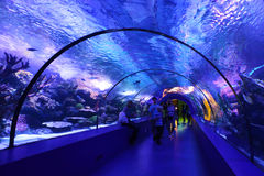 Aquarium Tunnel Royalty Free Stock Photo