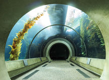 Aquarium tunnel in California Science Center Royalty Free Stock Photos