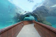 Aquarium Tunnel Stock Image