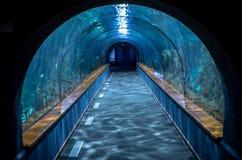 Aquarium tunnel Stock Images
