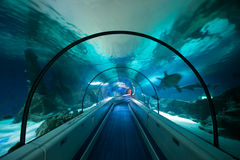 Aquarium Tunnel Underwater. Long Glass Tunnel Built Under Artificially Created Aquarium - All Sea & Ocean Life Visible royalty free stock image