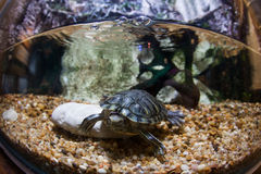 Aquarium. With turtle and coral in underwater observatory Stock Image
